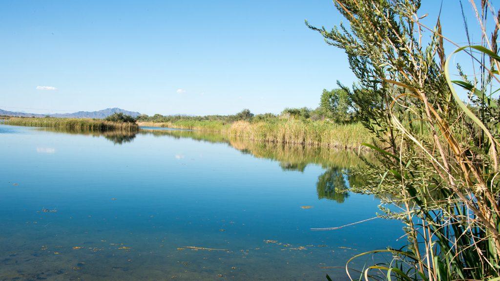 Colorado River Cibola Wildlife Refuge